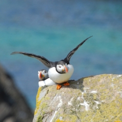Day Tour to the Cliffs of Moher - Puffin