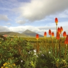Biking Irelands West Coast from Westport with views of Croagh Patrick Mountain.