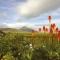 Biking Irelands West Coast from Westport with views of Croagh Patrick Mountain.