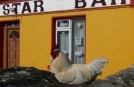 Exploring Ireland to Aran Islands on Group Tours, Rustic Bar