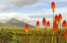 Group Holidays to Connemara, Croagh Patrick views